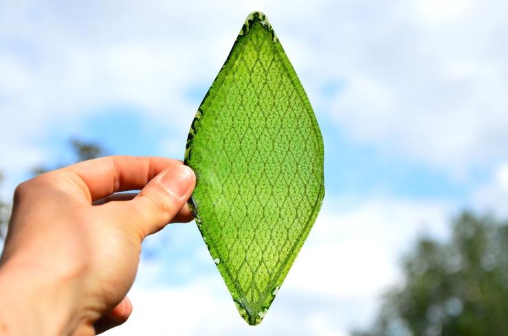 4-artificial-leaf-julian-melchiorri-1 (1)